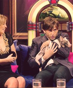 david with pig